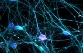 Poradnia Neurologiczna